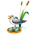 A bird beside the nest with eggs vector