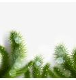 Green christmas tree branch vector