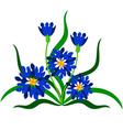 Cornflower vector