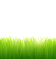 Natural background of grass on white background vector