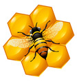 Bee on a part of honeycomb vector