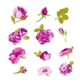 Set of floral design elements flower collection vector