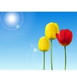 Red and yellow tulips on a blue sky background vector