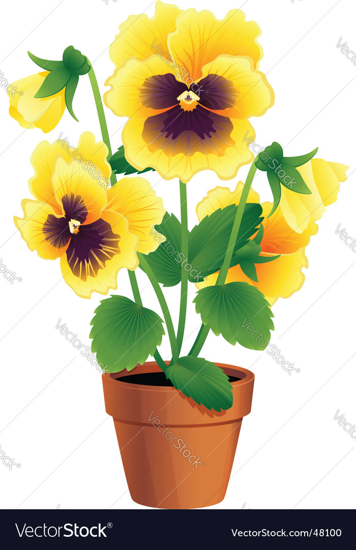 Pansy vector | Price: 1 Credit (USD $1)