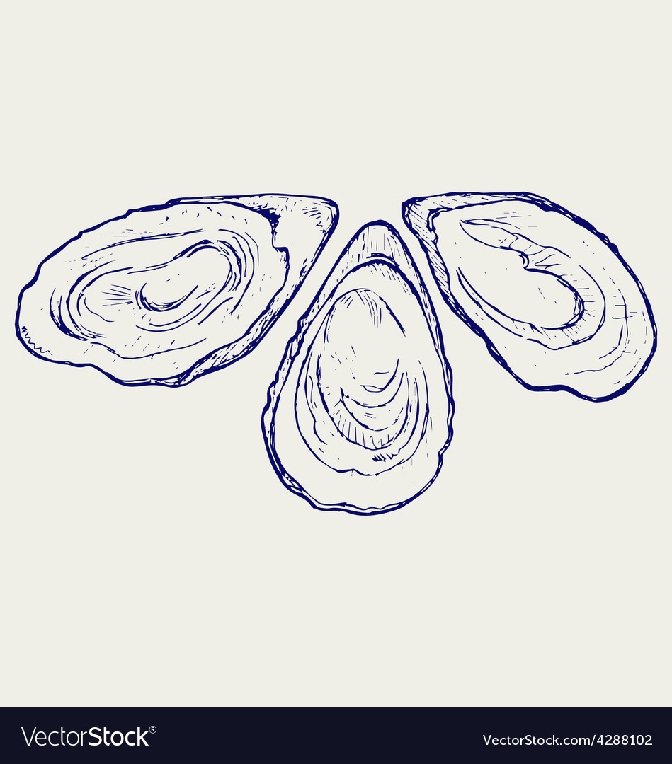 Fresh opened oyster vector | Price: 1 Credit (USD $1)