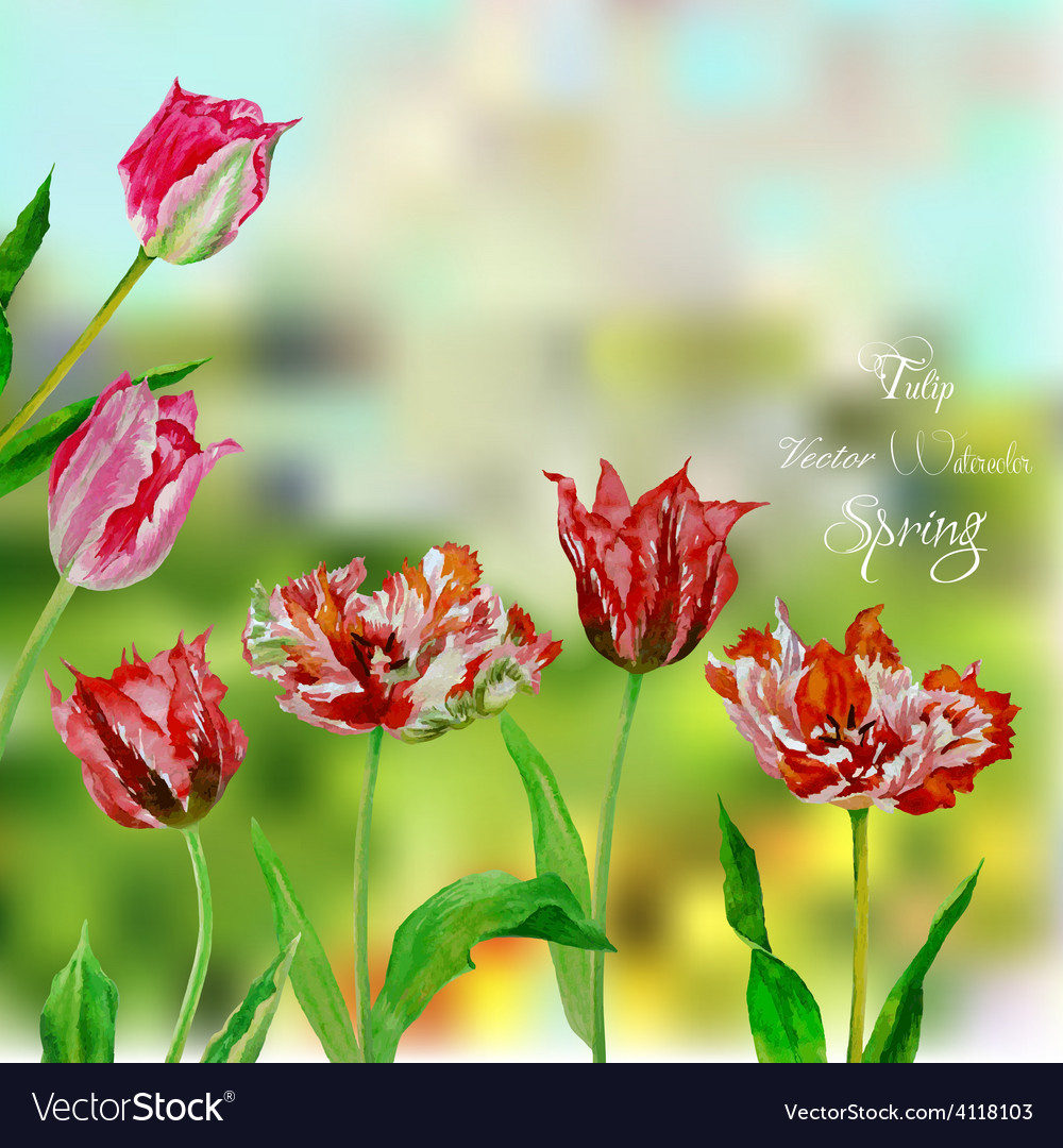 Background with bouquet of tulips vector