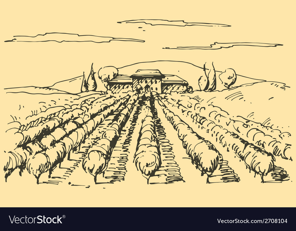 Hand drawn vineyard vector | Price: 1 Credit (USD $1)