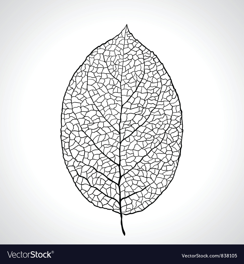 Black macro leaf natural isolated vector | Price: 1 Credit (USD $1)