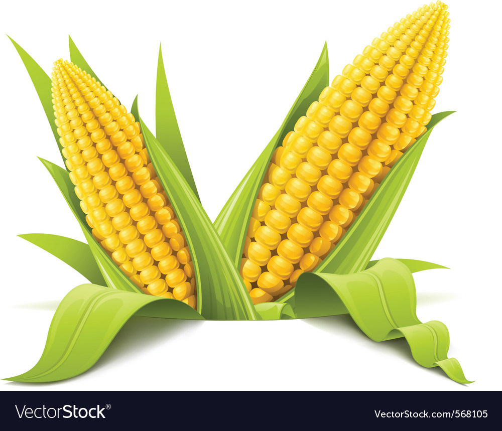 Couple corncob vector | Price: 1 Credit (USD $1)
