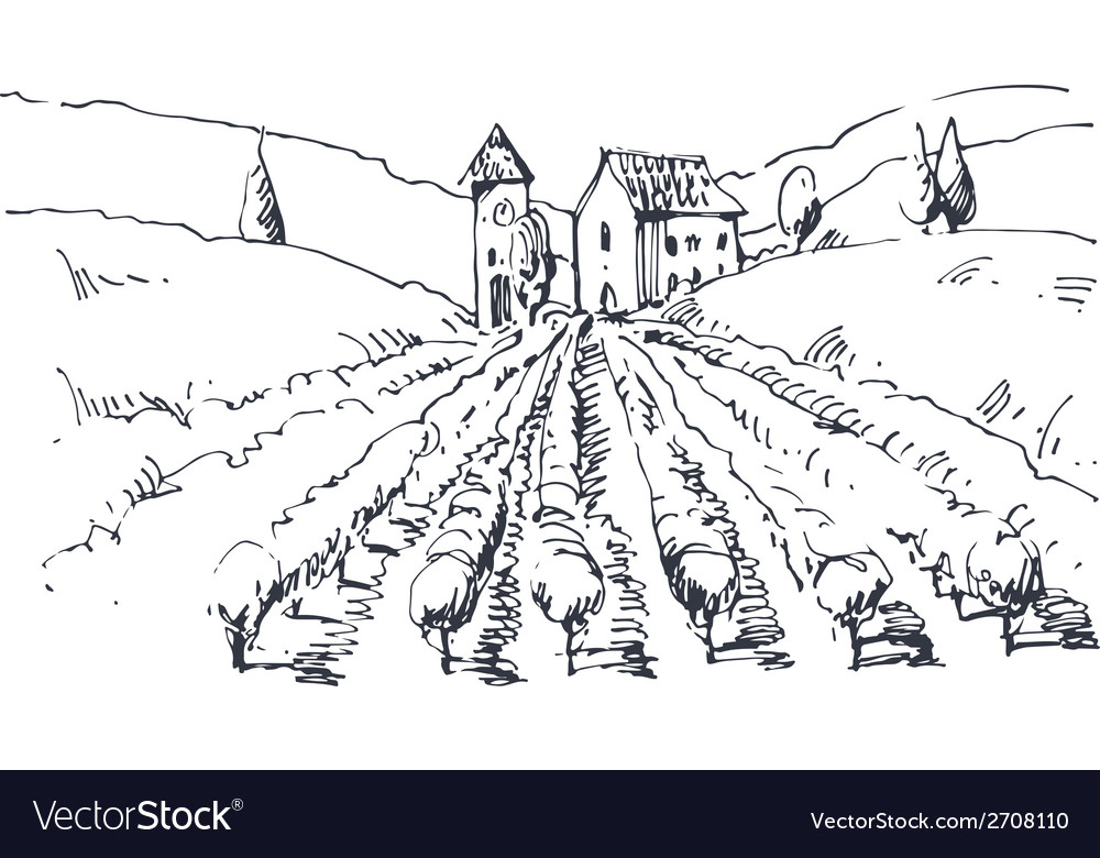 Hand drawn of a vineyard vector | Price: 1 Credit (USD $1)