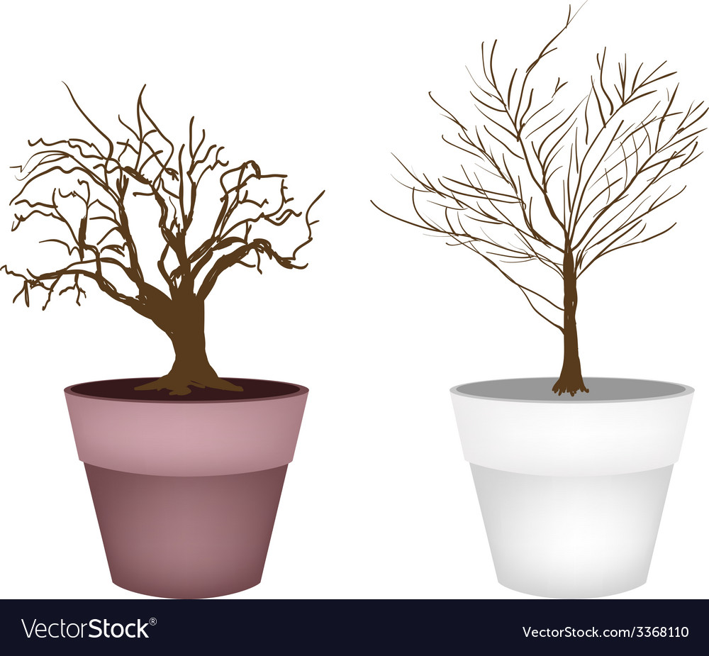 Two abstract isometric brown trees in flower pot vector | Price: 1 Credit (USD $1)