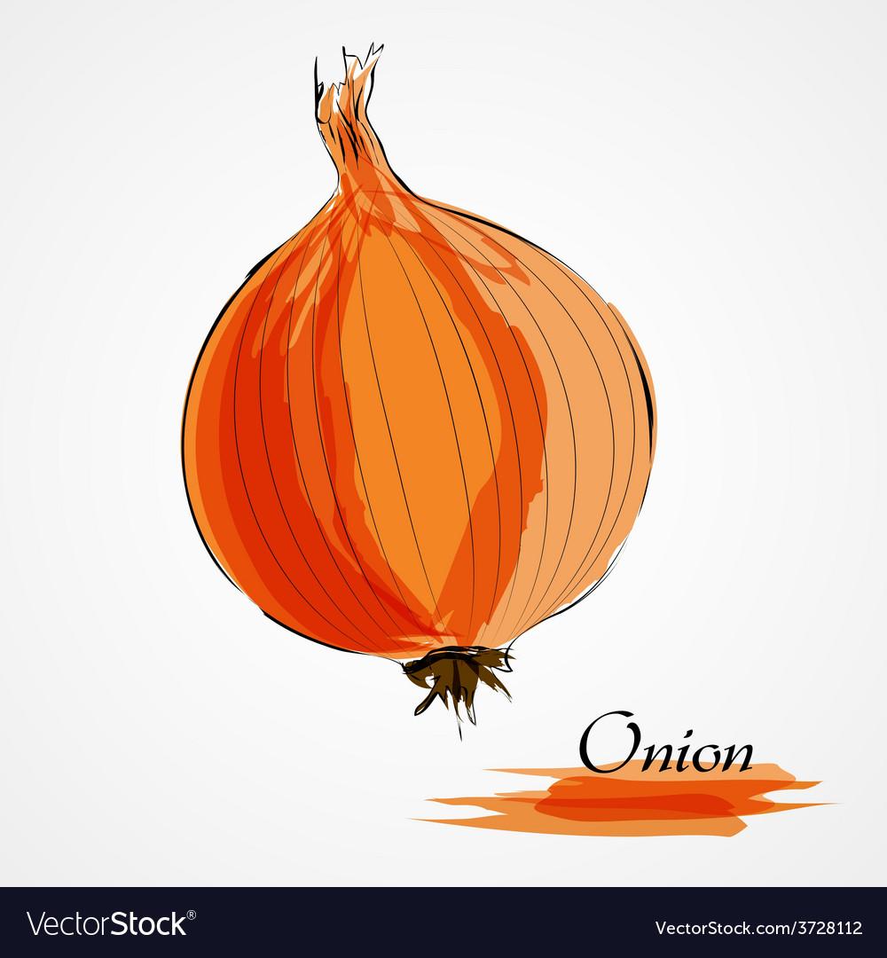 Onion vector | Price: 1 Credit (USD $1)
