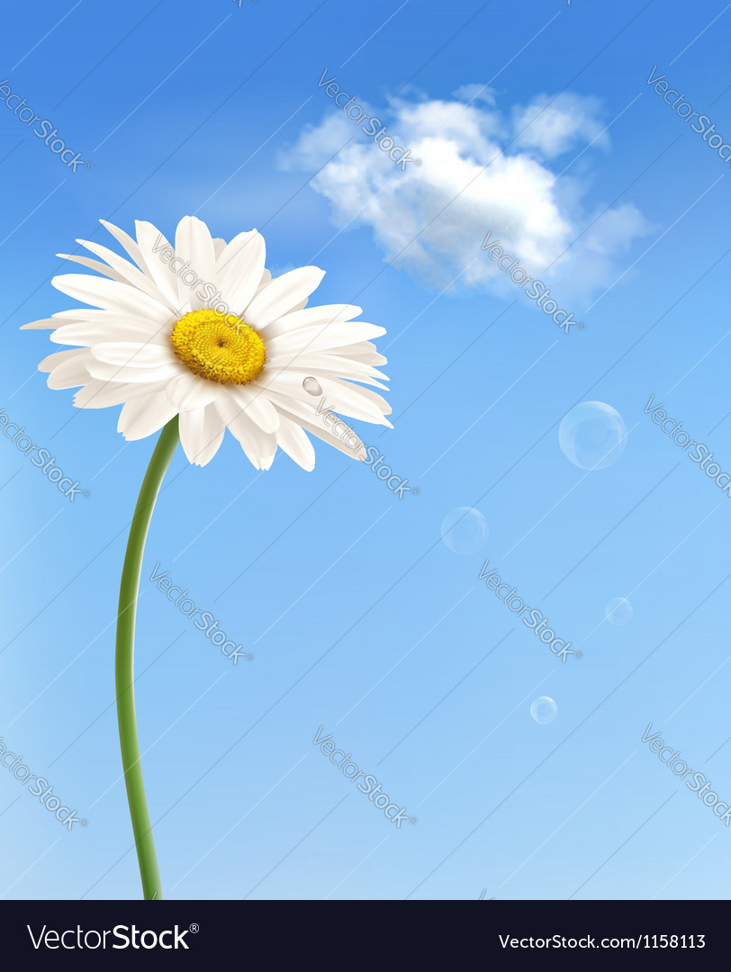 Beautiful white daisy in front of the blue sky vector | Price: 1 Credit (USD $1)