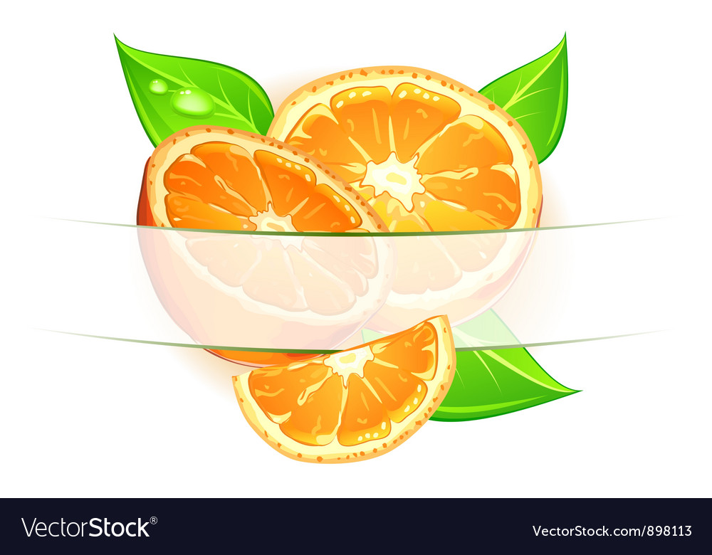 Citrus background vector | Price: 3 Credit (USD $3)