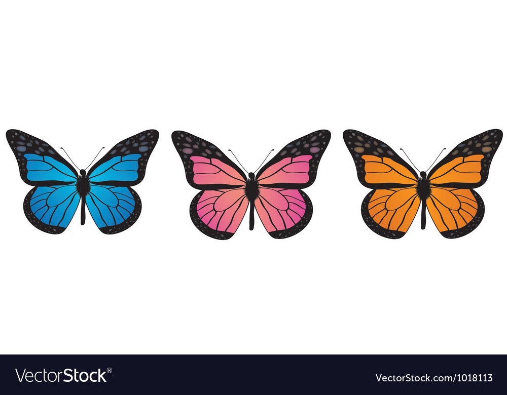 Monarch butterfly bllue orange and pink vector | Price: 1 Credit (USD $1)
