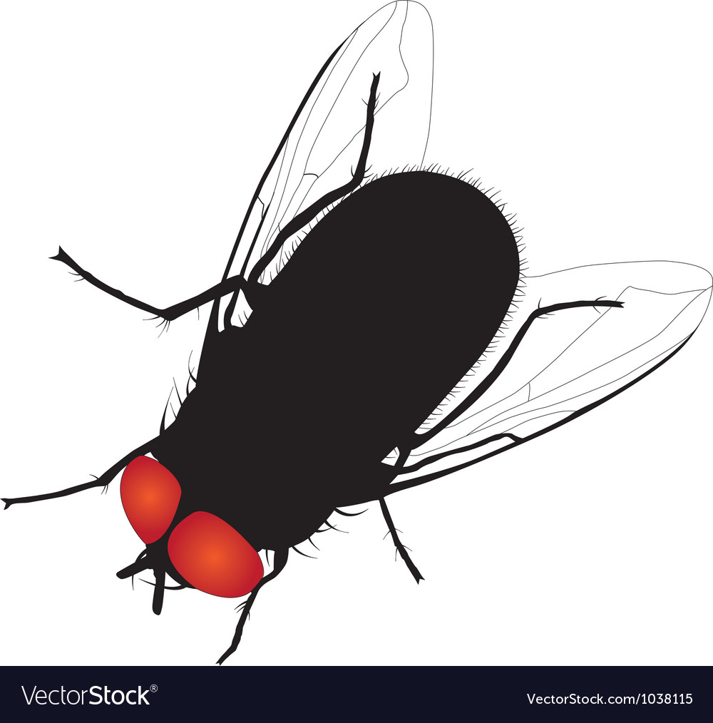 House fly silhouette on white background vector | Price: 1 Credit (USD $1)