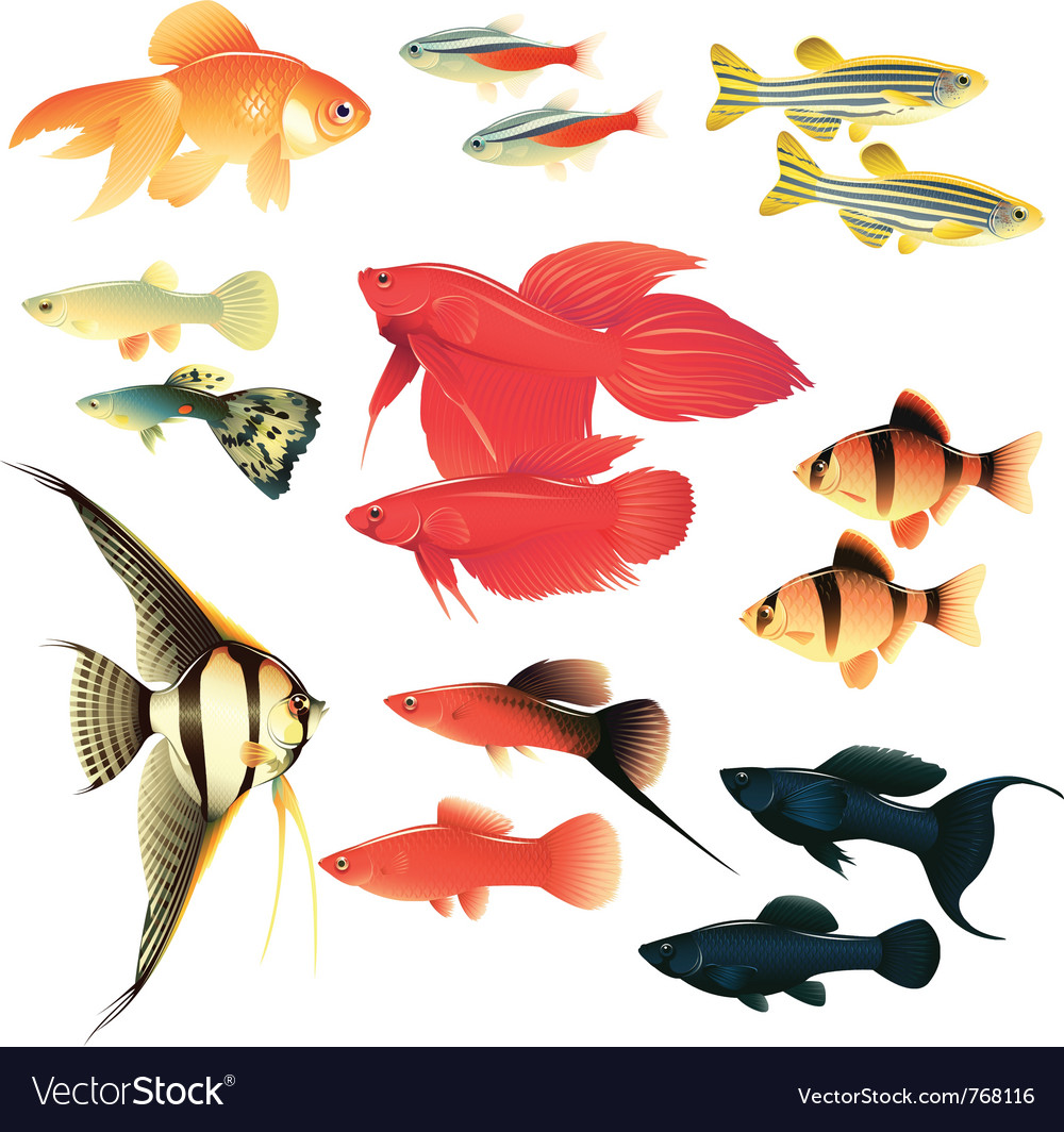 Aquarium fishes vector | Price: 3 Credit (USD $3)