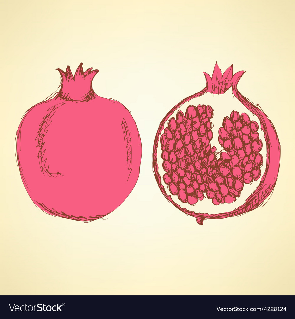 Sketch tasty pomegranates in vintage style vector | Price: 1 Credit (USD $1)