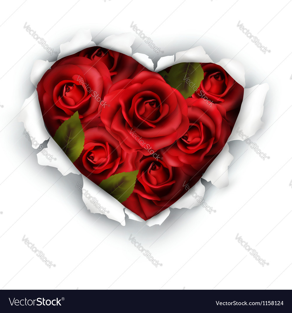 Valentine heart card design red roses and ripped vector | Price: 1 Credit (USD $1)