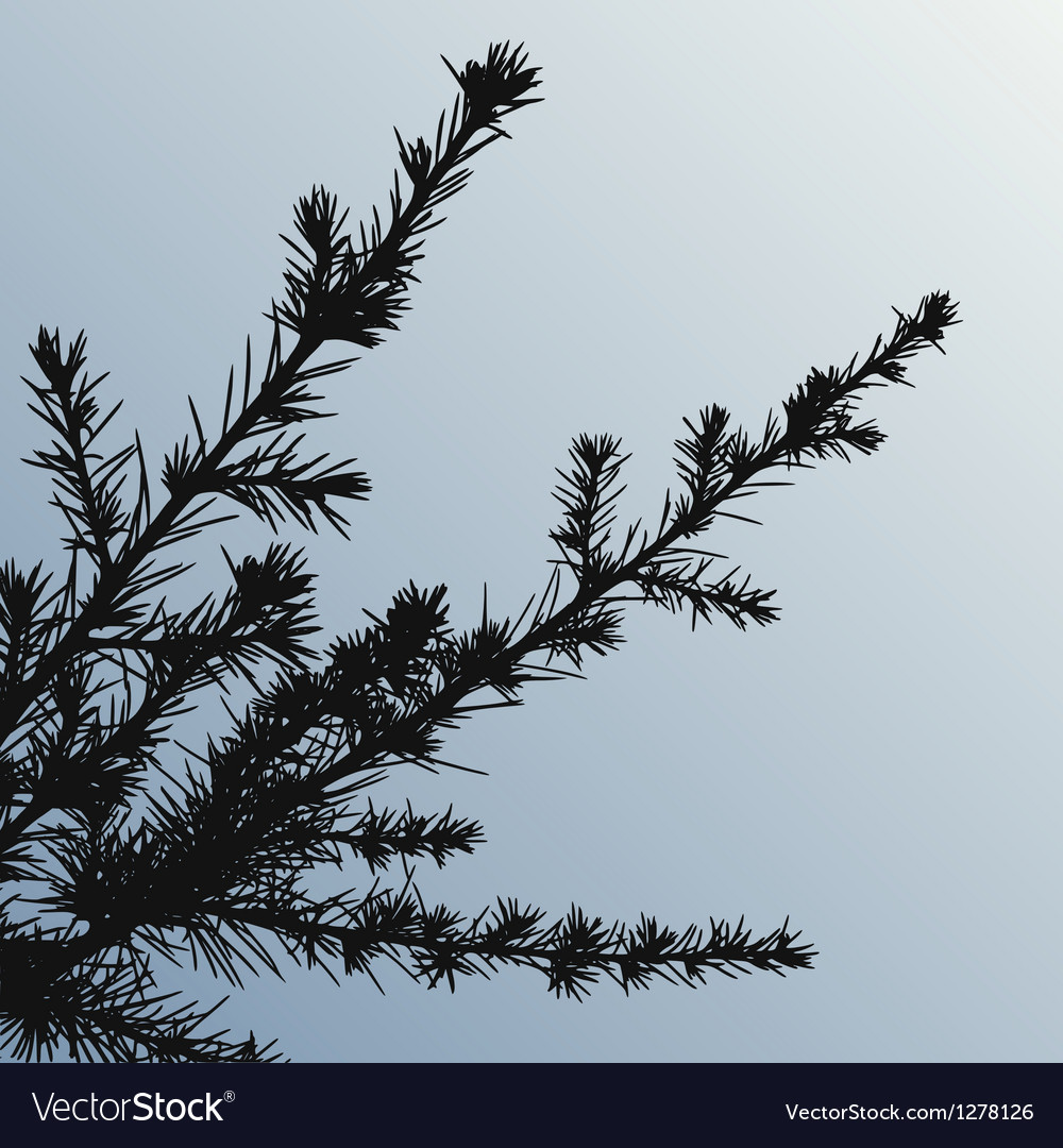 Pine tree branch vector | Price: 1 Credit (USD $1)