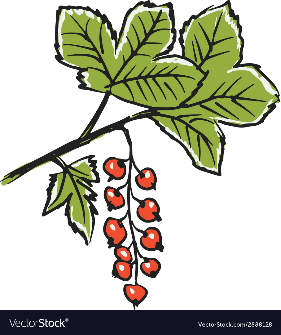 Red currants vector | Price: 1 Credit (USD $1)
