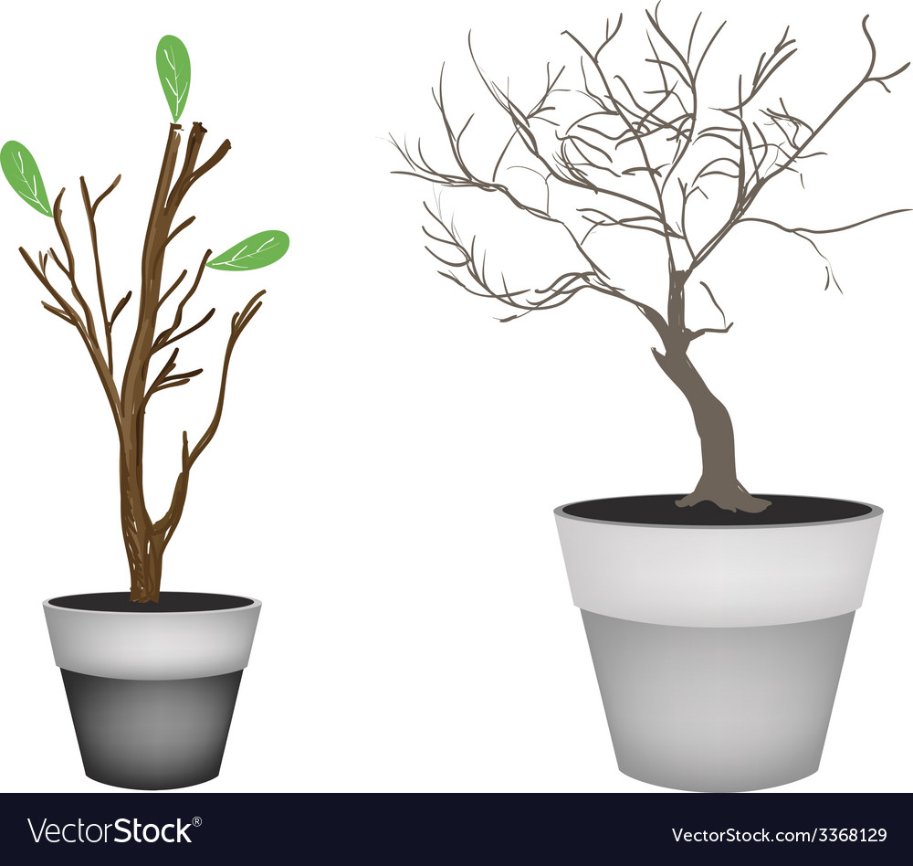 Brown trees and tree buds in flower pots vector | Price: 1 Credit (USD $1)