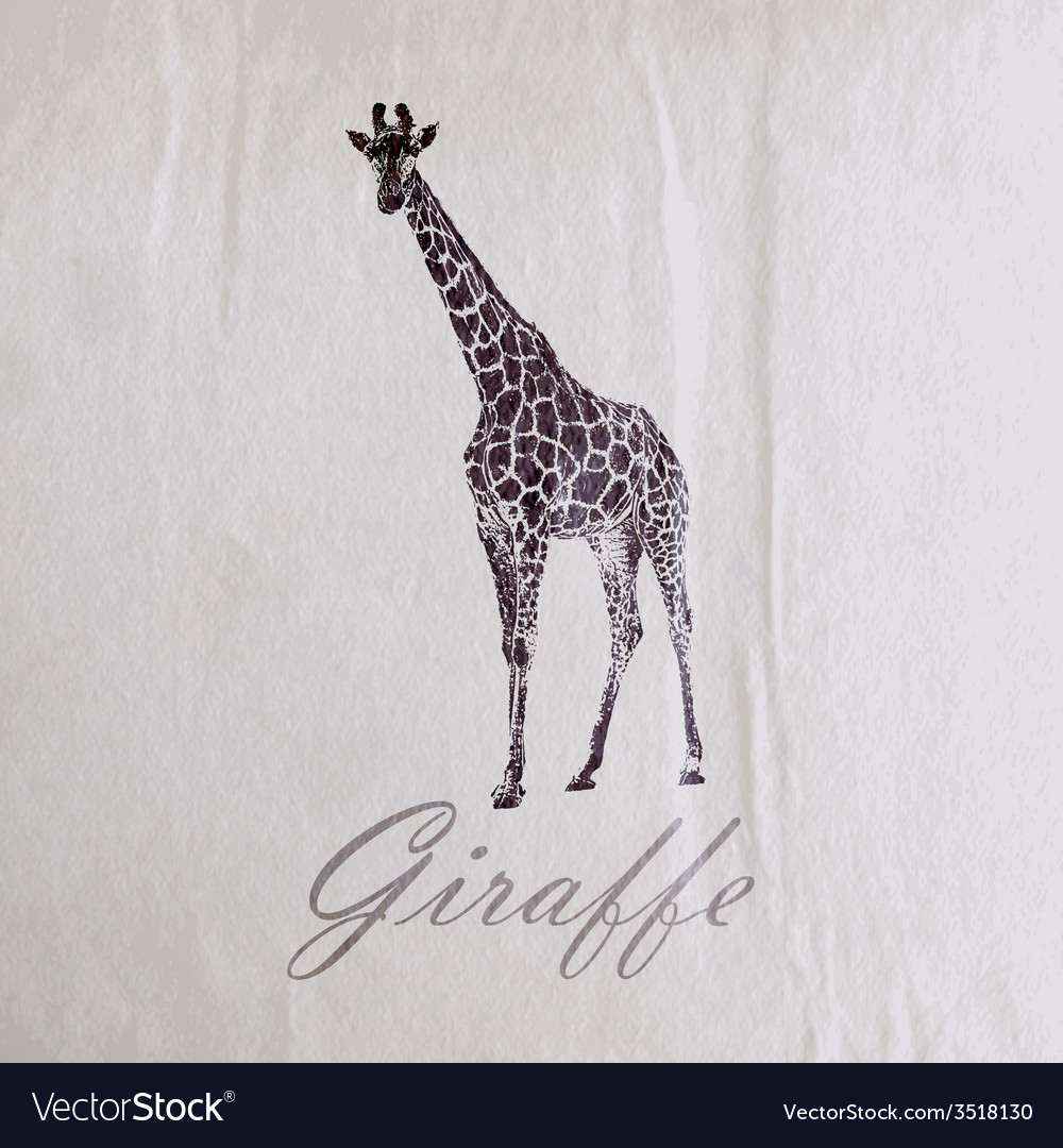 Vintage of a giraffe on the old wrinkled paper vector | Price: 1 Credit (USD $1)