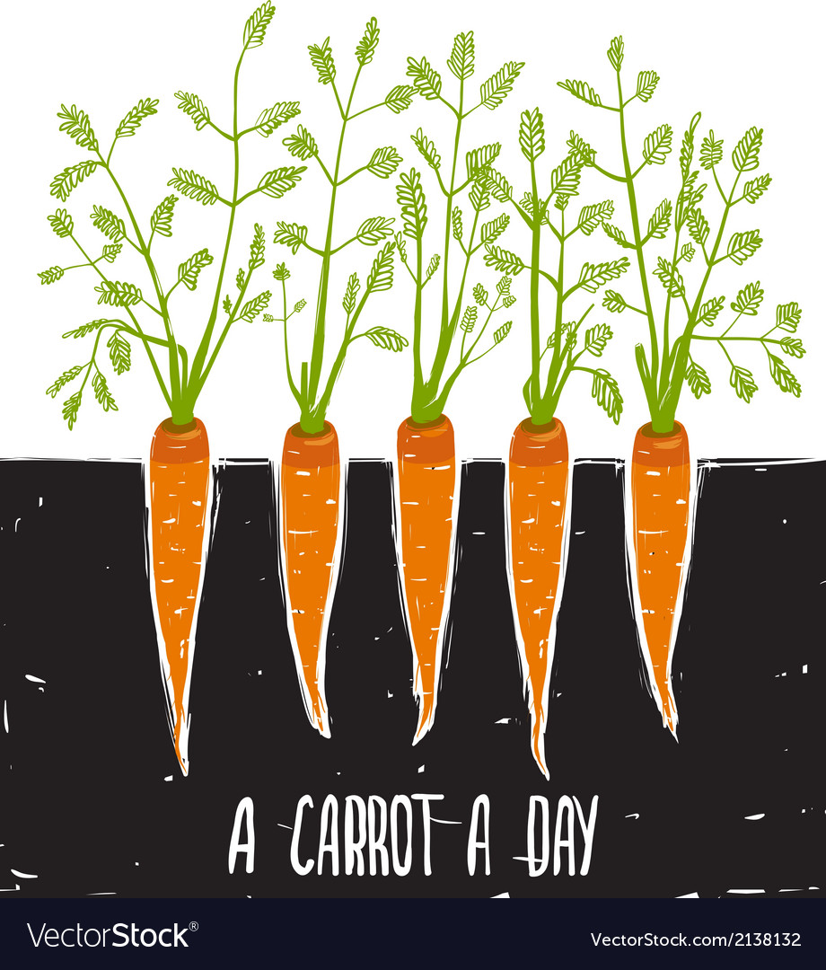 Growing carrots scratchy drawing and lettering vector