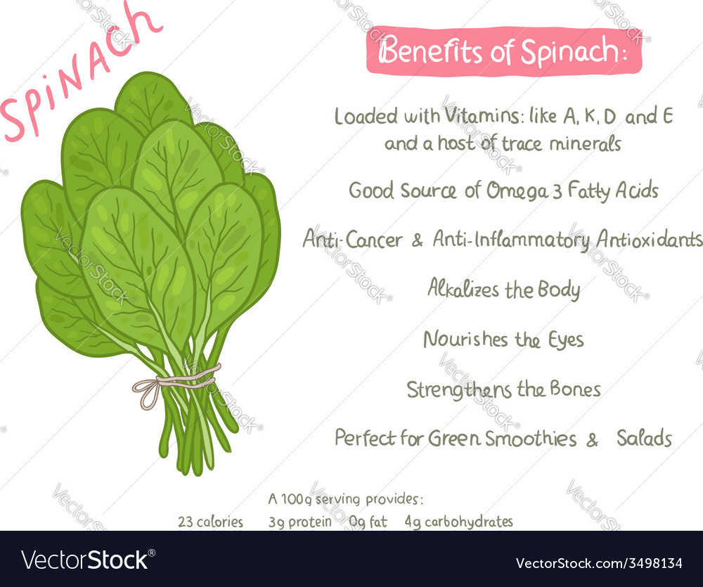 Cartoon hand drawn spinach health benefits vector | Price: 1 Credit (USD $1)