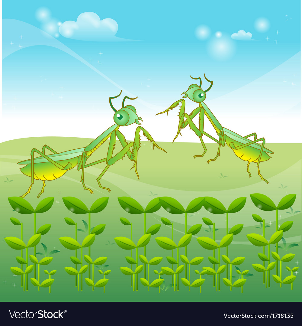 Praying mantis grasshopper cartoon vector | Price: 1 Credit (USD $1)