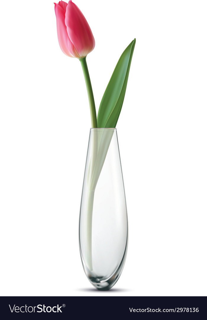 Tulip vase vector | Price: 1 Credit (USD $1)
