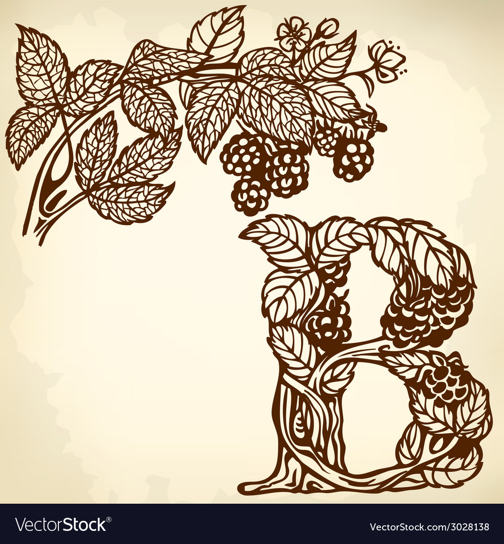 Blackberries on a branch brown b vector | Price: 1 Credit (USD $1)