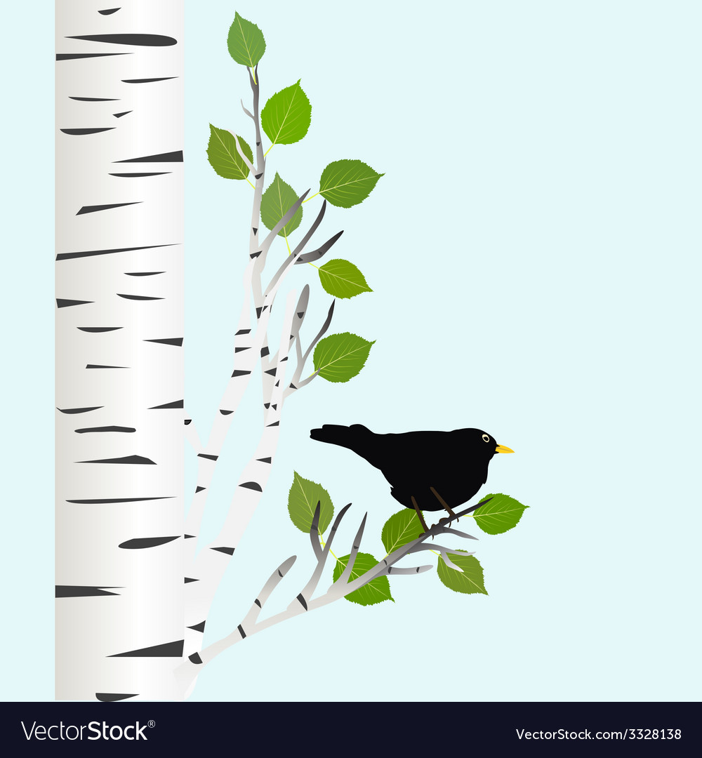 Blackbird on a birch branch vector | Price: 1 Credit (USD $1)