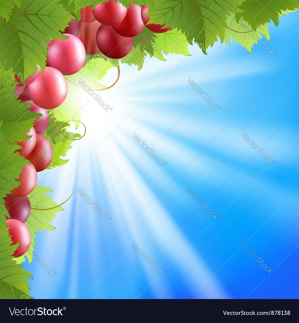 Blue sky and vine vector | Price: 3 Credit (USD $3)