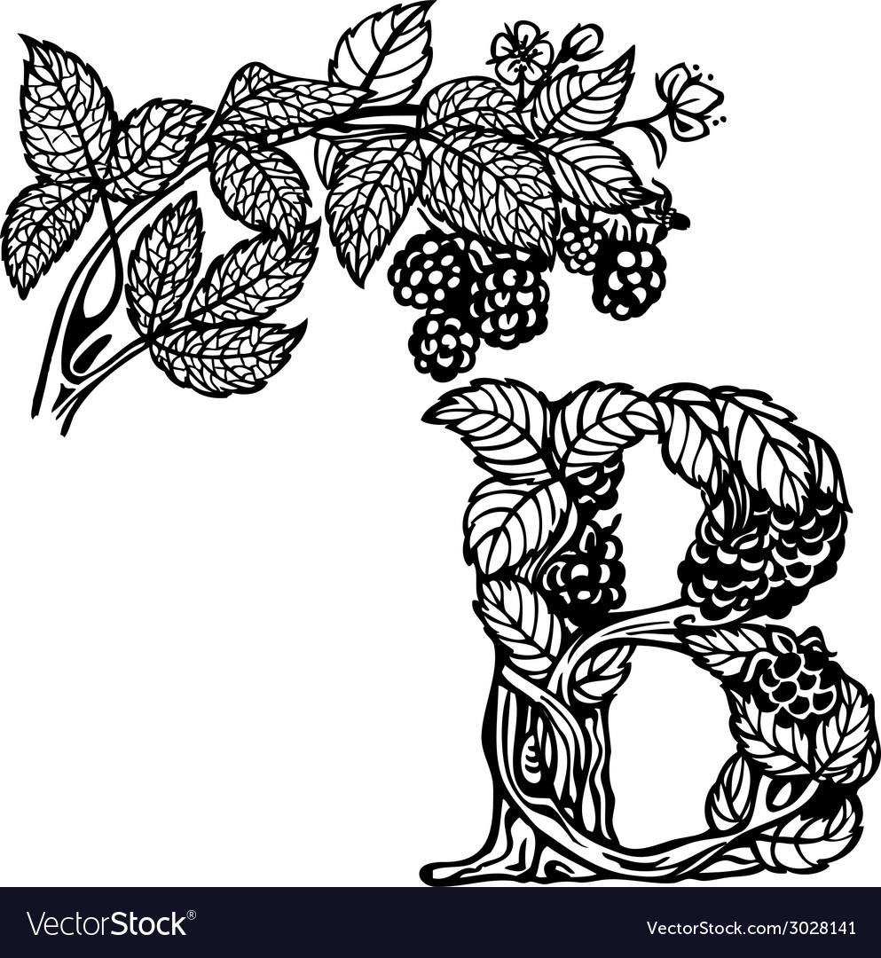 Blackberries on a branch b vector | Price: 1 Credit (USD $1)