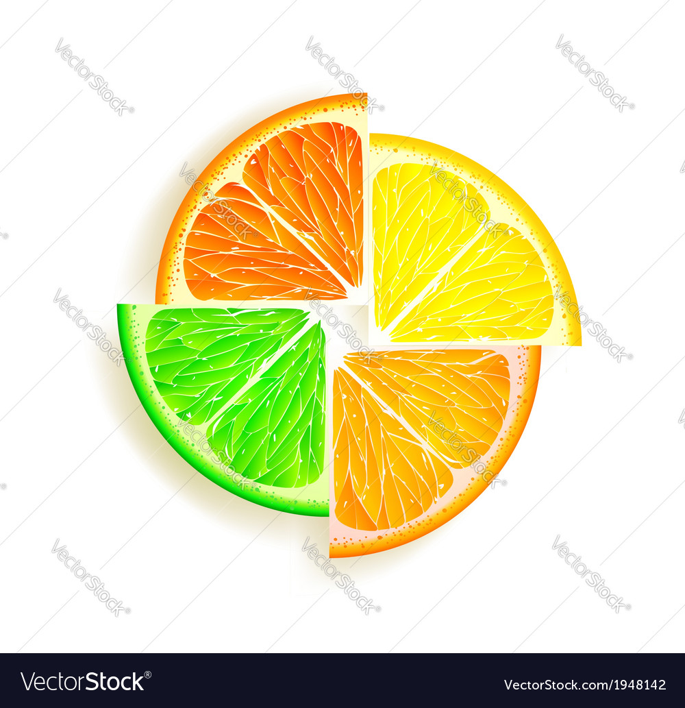 Citrus13 vector | Price: 1 Credit (USD $1)