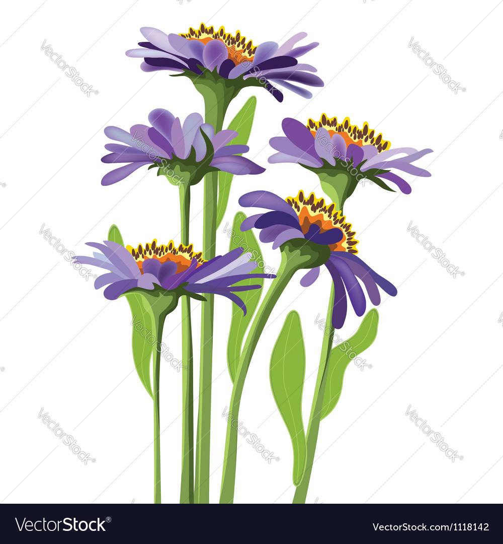 Floral design purple aster vector | Price: 1 Credit (USD $1)