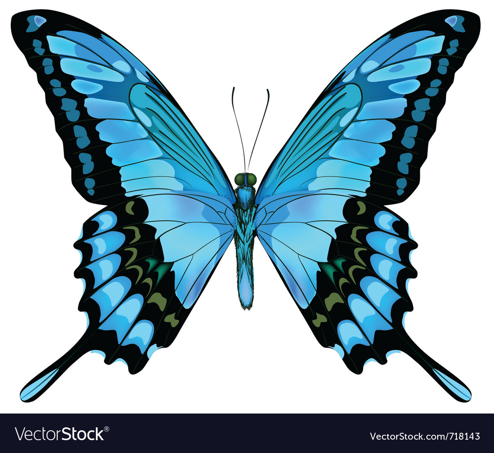 Beautiful isolated blue butterfly vector | Price: 1 Credit (USD $1)