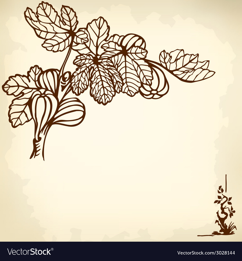 Fig branch vector | Price: 1 Credit (USD $1)