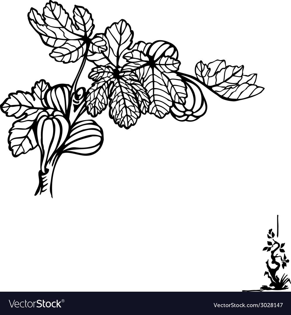 Fig branch vector | Price: 1 Credit (USD $1)