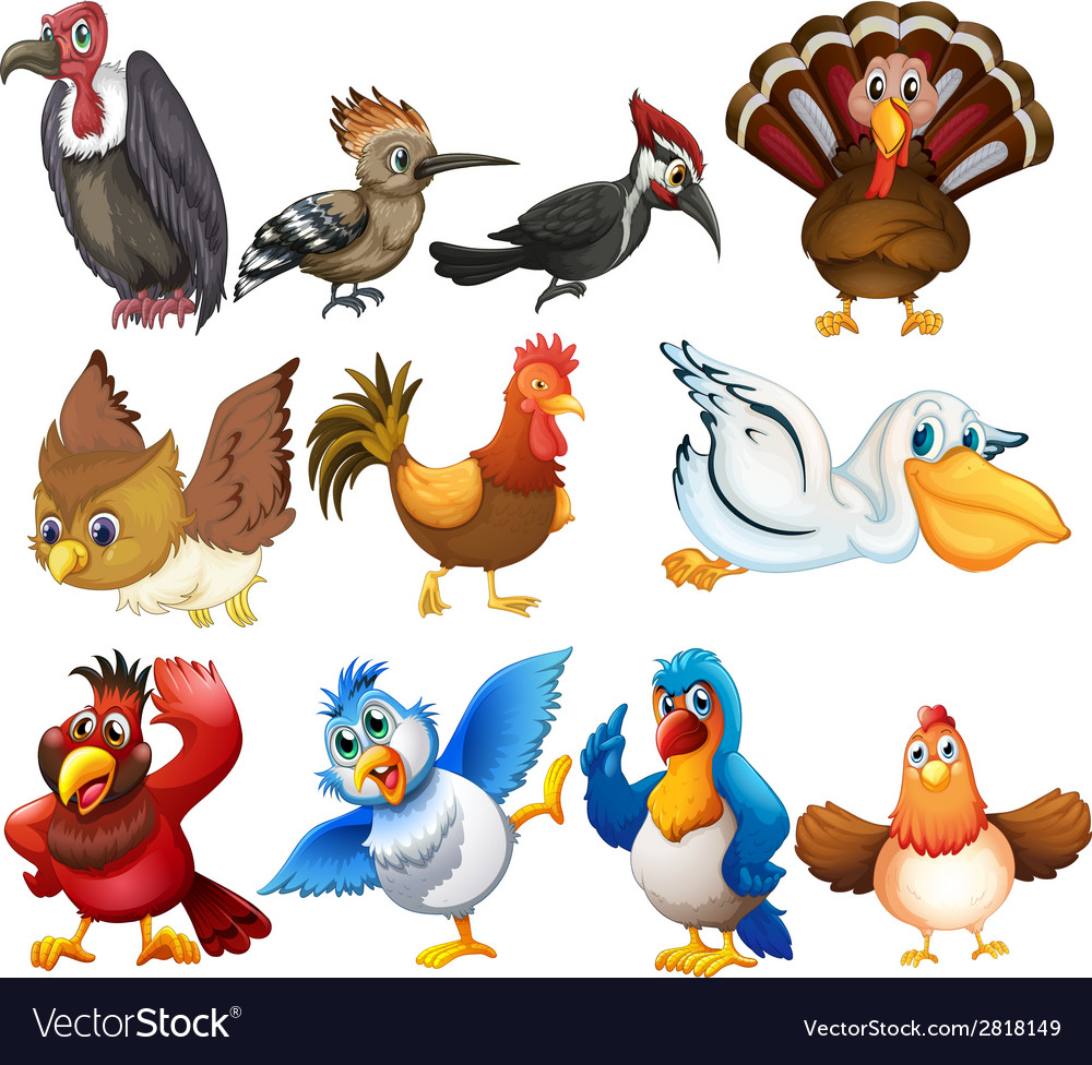 Bird collections vector | Price: 3 Credit (USD $3)