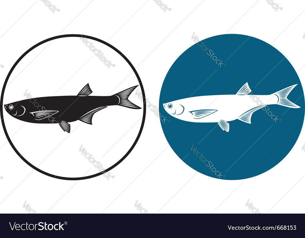Herring fish vector | Price: 1 Credit (USD $1)