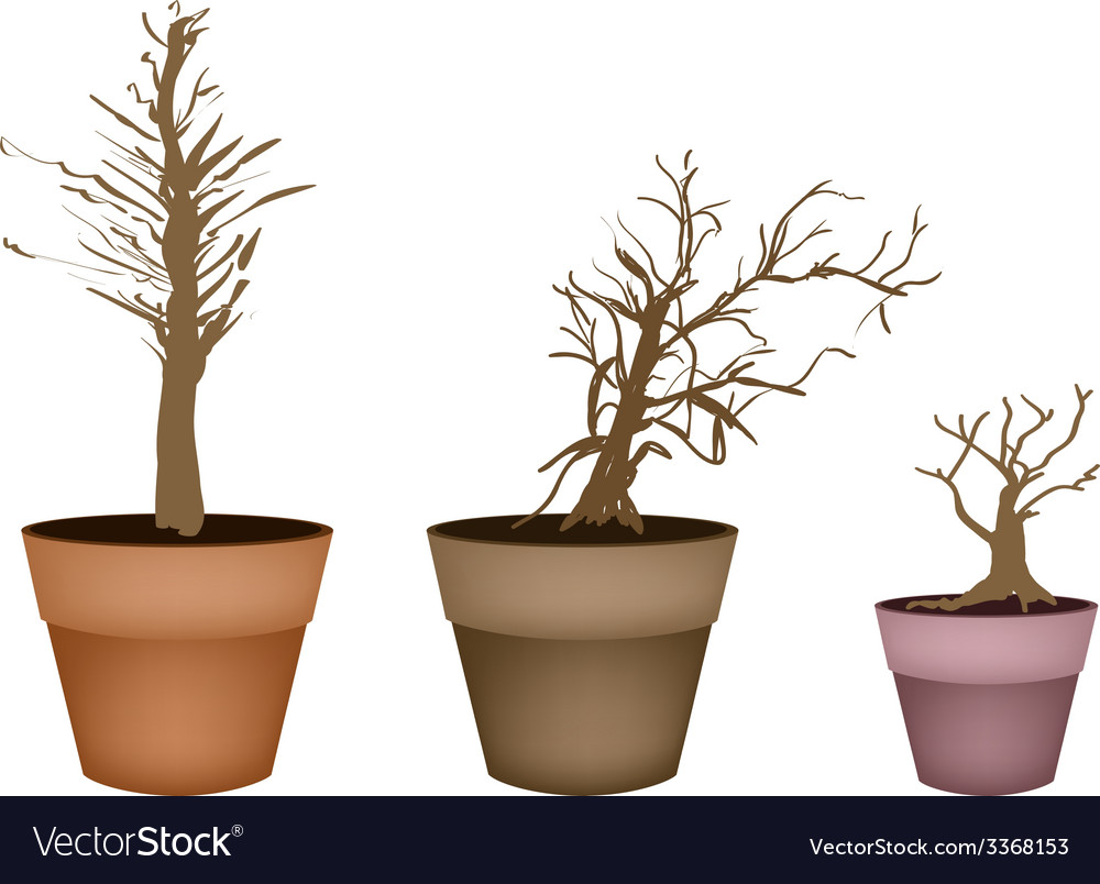 Three abstract isometric brown trees in flower pot vector   Price: 1 Credit (USD $1)