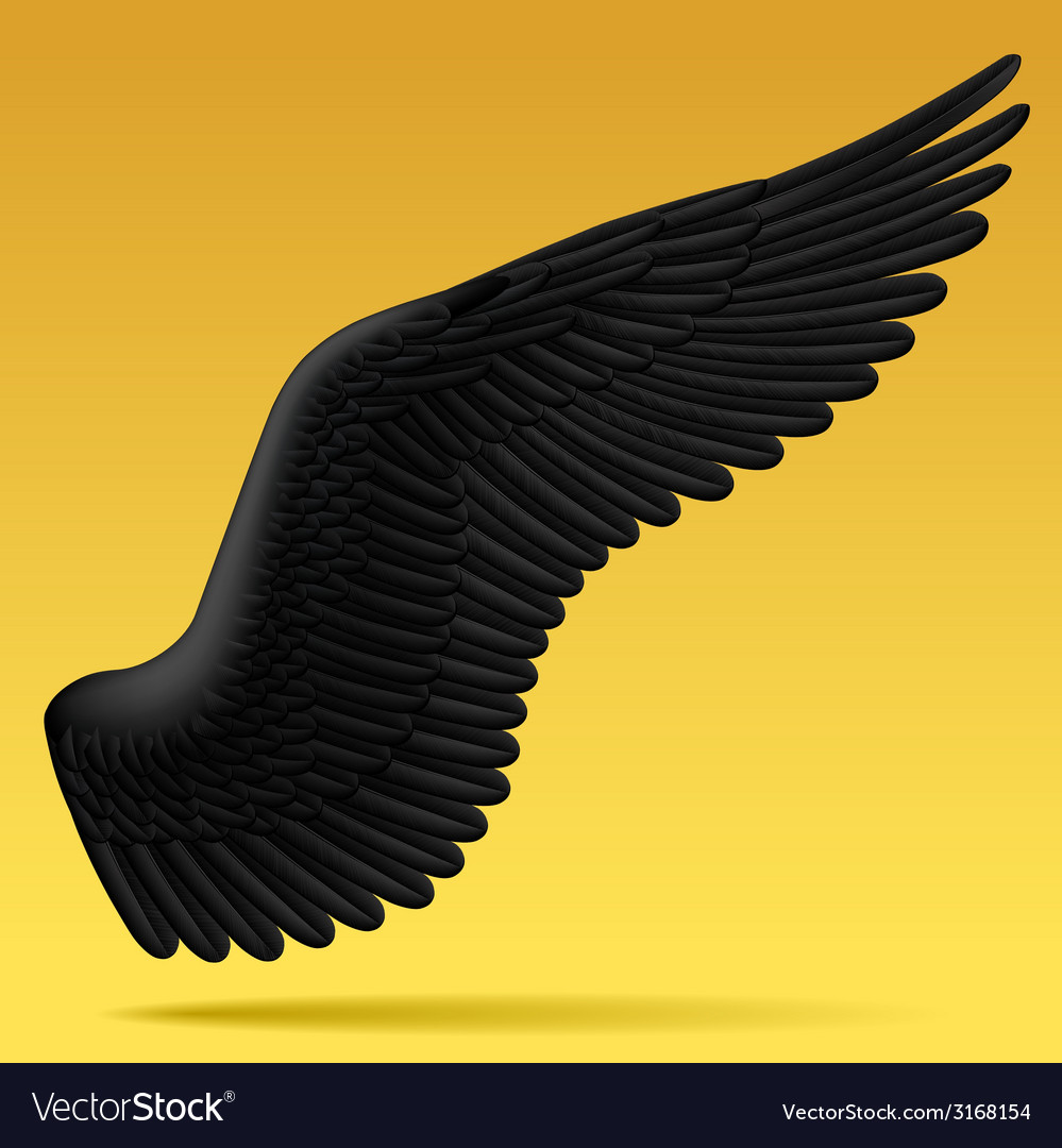 Black wing vector | Price: 1 Credit (USD $1)
