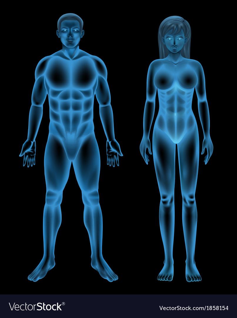 Human body vector   Price: 1 Credit (USD $1)