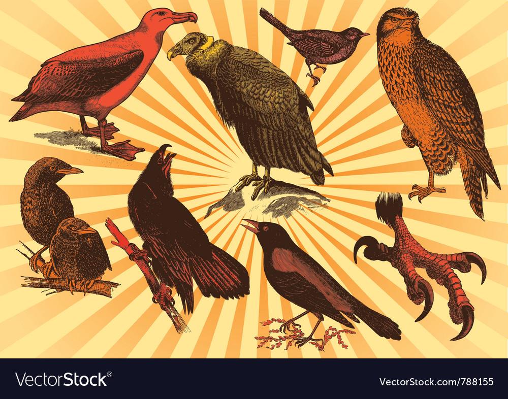 Bird species vector | Price: 1 Credit (USD $1)