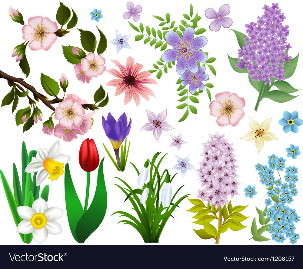 Collection of spring flowers raster version vector | Price: 1 Credit (USD $1)