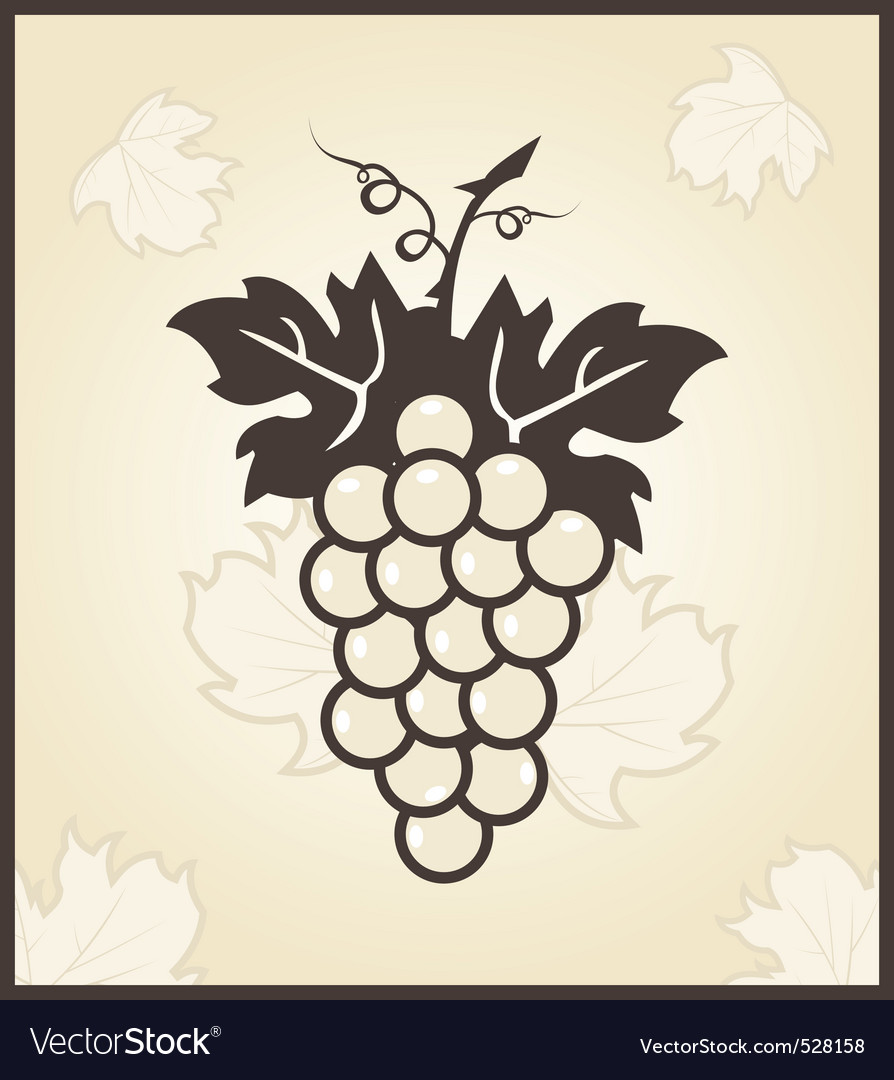 Retro engraving of grapevine vector | Price: 1 Credit (USD $1)