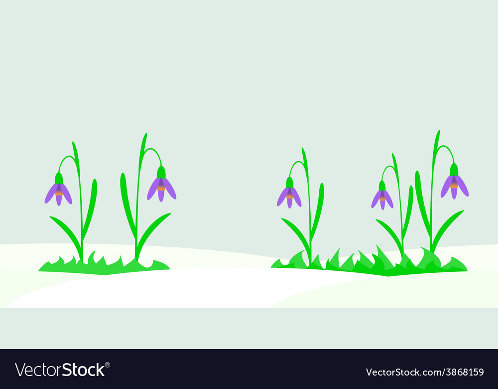 Seamless with snowdrops vector | Price: 1 Credit (USD $1)