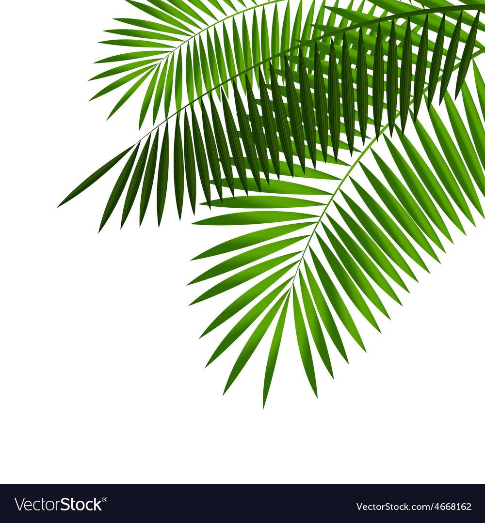 Palm leaf vector   Price: 1 Credit (USD $1)
